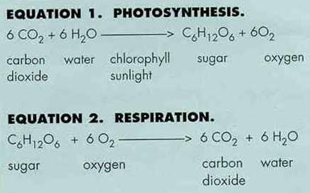 photosynthesis_equation1354260592094