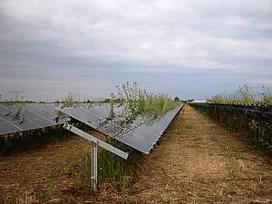 Solar-panel-grass