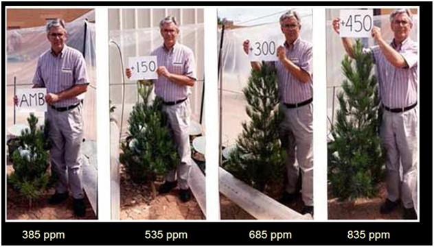 tree growth at co2 levels